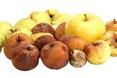 Pommes putréfiées Images libres de droits