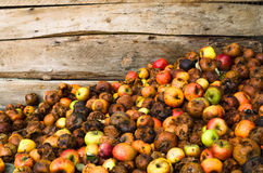 Pommes putréfiées Photo stock