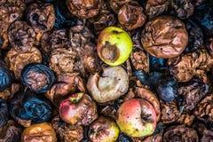 Pommes putréfiées Photographie stock libre de droits