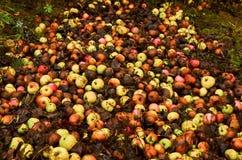 Pommes putréfiées en tant que mensonge jeté de déchets au sol dans la ville photos stock