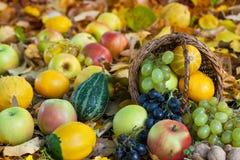 Pommes, raisins et potirons dans l'herbe d'automne photos libres de droits