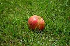 Pommes rouges, été, herbe, vitamines, fruits Images libres de droits