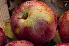 Pommes rouges Photo stock
