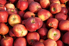 Pommes rouges Photo libre de droits