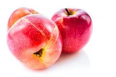 Pommes rouges au-dessus du fond blanc Photo libre de droits
