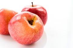Pommes rouges au-dessus du fond blanc Images libres de droits