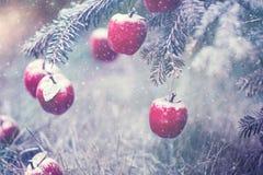 Pommes rouges dans la fin de neige  Photos stock
