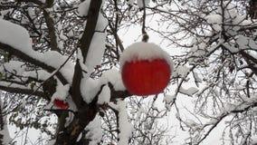 Pommes rouges dans le jardin sur un arbre couvert de neige contre Apple en hiver avec la neige photos libres de droits