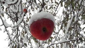 Pommes rouges dans le jardin sur un arbre couvert de neige contre Apple en hiver avec la neige images stock