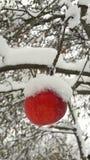 Pommes rouges dans le jardin sur un arbre couvert de neige contre Apple en hiver avec la neige photos stock