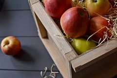 Pommes rouges dans un cadre Photo stock