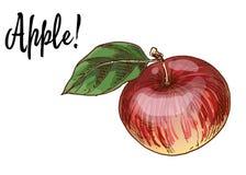 Pommes rouges Delicious mûres avec la feuille verte d'isolement sur le fond blanc Illustration de vecteur illustration stock