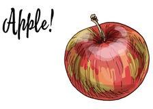 Pommes rouges Delicious mûres d'isolement sur le fond blanc Illustration de vecteur illustration de vecteur
