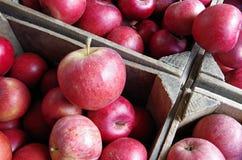 Pommes rouges empilées dans des caisses en bois de ferme Photos stock