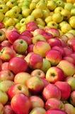 Pommes rouges et jaunes Image libre de droits