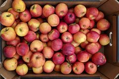 Pommes rouges et jaunes dans la bo?te images stock