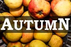 Pommes rouges et jaunes, le fond d'automne d'inscription images stock