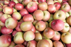 Pommes rouges et vertes Images stock