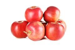 Pommes rouges fraîches Image libre de droits