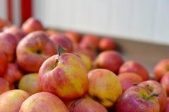 Pommes rouges fraîches savoureuses à l'épicerie Achetez et mangez de la nourriture naturelle de vitamine Département du marché d' Photos libres de droits