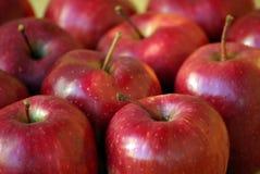 Pommes rouges juteuses Photographie stock libre de droits