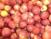 Pommes rouges mûres de la nouvelle récolte image libre de droits