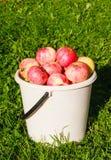 Pommes rouges mûres dans un seau Images stock