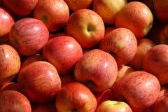 Pommes rouges organiques Image libre de droits