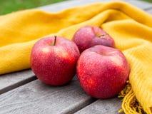 Pommes rouges sur la couverture orange sur un bois dans le jardin image libre de droits