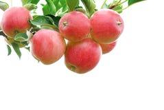Pommes rouges sur le fond blanc Image stock