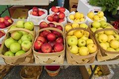 Pommes sélectionnées fraîches Photographie stock libre de droits