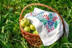 Pommes saines de consommation de votre jardin image stock