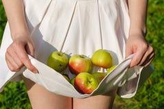 Pommes saines de consommation de votre jardin photos libres de droits