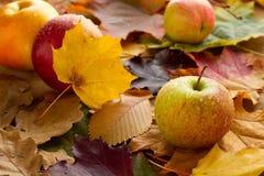 Pommes sur des lames d'automne Image libre de droits