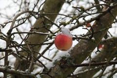 Pommes sur l'arbre et la première neige images stock