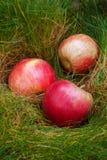Pommes sur l'herbe verte Photographie stock