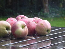 Pommes sur la table de jardin Images libres de droits