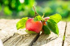 Pommes sur la table en bois au-dessus du fond d'été Images libres de droits