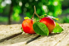 Pommes sur la table en bois au-dessus du fond d'été Photographie stock libre de droits