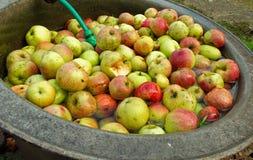 Pommes sur le bain d'eau Photos libres de droits