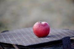 Pommes sur un arbre en décembre Photos libres de droits
