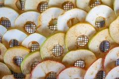 Pommes sur un dessiccateur de trellis Image libre de droits