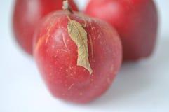 pommes trois Image libre de droits