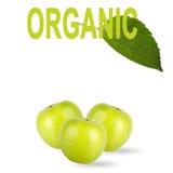 Pommes vertes avec l'inscription d'isolement sur le fond blanc images stock