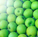 Pommes vertes cultivées en vente Images stock