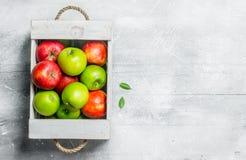 Pommes vertes et rouges fraîches juteuses dans une boîte en bois photos stock