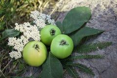 Pommes vertes juteuses Photographie stock libre de droits