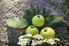 Pommes vertes juteuses Images libres de droits