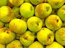 Pommes vertes organiques photo libre de droits