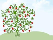 Pommier Image libre de droits